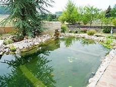 schwimmteich die alternative zum schwimmteiche