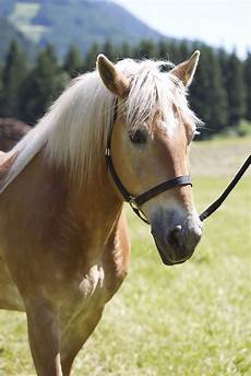 Ausmalbilder Bauernhof Mit Pferden Urlaub Am Bauernhof Mit Pferden Farm Holidays With