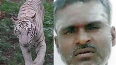 Gambar Harimau Putih Marah Semburat Warna
