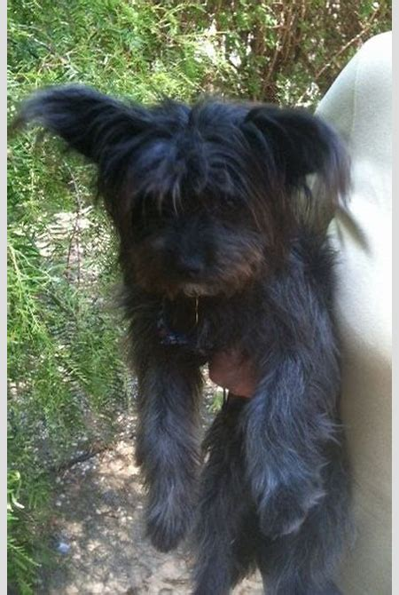 Zoe's Friends Animal Rescue - HOORAY! I'M ADOPTED!276 ...