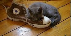 enlever odeur chaussure 10 astuces efficaces pour enlever les mauvaises