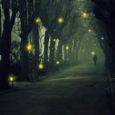 fireflies live wallpaper android apps play