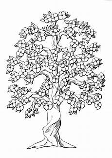 semeruco para colorear pinto dibujos colorear cerezo japon 233 s