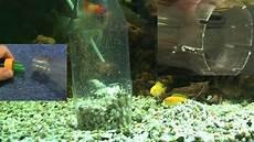 aquarium saugglocke selber bauen kostet fast gar nichts