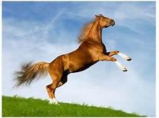 Tekhnik Membuat Manusia Kuda Bersayap Menggunakan