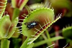 why are some plants carnivorous 187 science abc