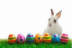7x5ft Rabbits Easter Eggs Photography by Easter Bunny Stock Photos Pictures Royalty Free Images