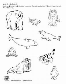 arctic animals printable coloring pages 17219 arctic animals coloring pages at getcolorings free printable colorings pages to print and