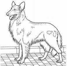 collie coloring page supercoloring