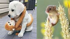 cute baby animals videos compilation cute moment of the