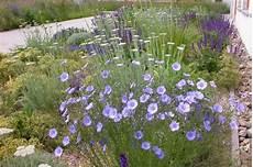pflanzen für trockene sonnige standorte bl 252 tenschleier perennemix stauden ring