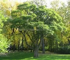 arbre décoratif extérieur 29450 arbres