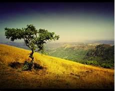 paisagens do wallpaper p 225 41