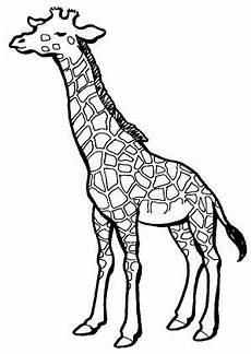 Malvorlagen Giraffen Gratis 8 Beste Ausmalbilder Giraffe Tiere Malvorlagen