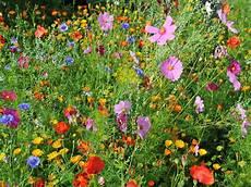 180 S Welt Blumen