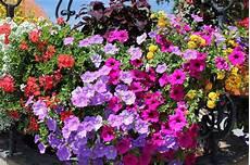 fiori a cascata fiori a cascata in primavera 10 idee vita donna
