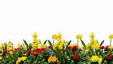 ᐅ pflanze auf rechnung kaufen alle rechnungskauf shops