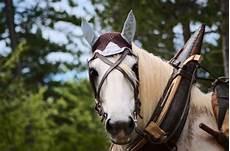50 Gambar Kuda Putih Paling Bagus Kembang Pete