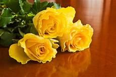 bambino sente l odore di bambino sente l odore di un fiore giallo immagine