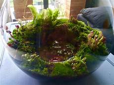 carnivorous plants terrarium 園芸