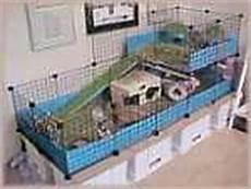gabbia per porcellino d india la gabbia come deve essere