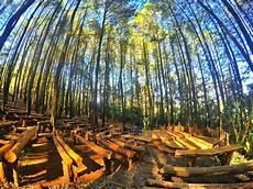 Wisata Di Jogja Hutan Pinus Academic Indonesia