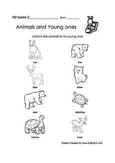 animals and their youngs worksheets 14094 animal worksheet new 229 animal and their worksheet