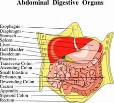 abdominal diagram 17 best images about referred abdominal quadrants on