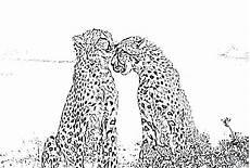 Kostenlose Malvorlage Gepard Ausmalbilder Gepard Zeichnung