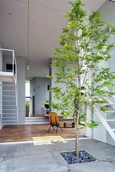 arbre interieur deco un tronc d arbre en d 233 co int 233 rieur arbre d 233 co
