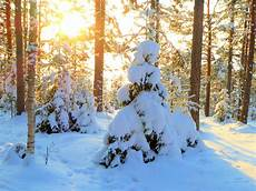 silvester in finnland h 252 tte ferienhaus direkt am see