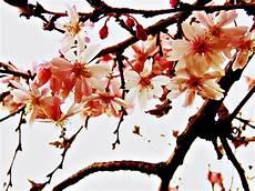 Koleksi Dp Bbm Bergerak Bunga Kumpulan Gambar