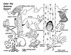 desert animals coloring pages printable 16950 habitats of the world activity