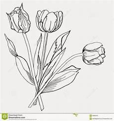 Sketsa Bunga Tulip Gambar Pemandangan
