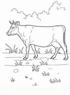 ausmalbilder kuh malvorlagen ausdrucken 2
