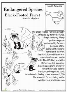 endangered animal worksheets 14298 13 endangered species 4th grade worksheets education