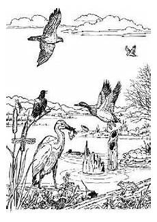 animals coloring pages 16923 image result for estuary coloring sheet animal coloring pages coloring pages sketches