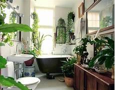 pflanzen im badezimmer die besten vorschl 228 ge f 252 r sie