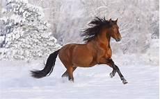 Ausmalbilder Pferde Im Winter Hintergrundbilder Tiere Im Winter
