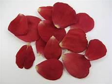 Petals Photo