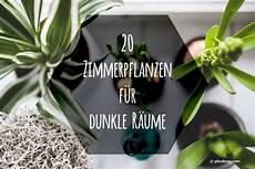 Pflanzen Wenig Licht - zimmerpflanzen f 252 r dunkle r 228 ume 20 schattenpflanzen