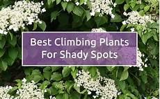 Climbing Plant Shade