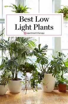 8 houseplants that can survive urban apartments low light and watering apartment therapy