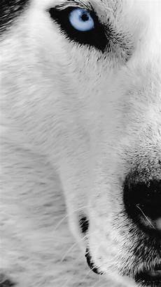 black and white wolf wallpaper iphone wolf wallpaper for iphone 72 images