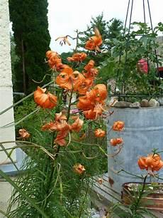 welche pflanzen bl 252 hen jetzt mein sch 246 ner garten forum