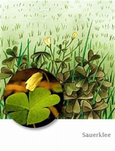 Mittel Gegen Unkraut Im Rasen - sauerklee tipps bei baldur garten