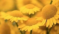 la jaune jaune couleur jaune