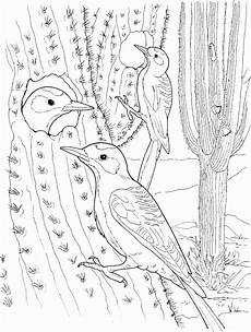 Cactus Plant Coloring Pages Free Printable Cactus Coloring Pages For