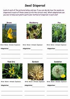 plants lesson ks1 13726 activity sheets on seed dispersal teaching resources