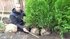 hecke pflanzen thuja erster heckenschnitt tutorial
